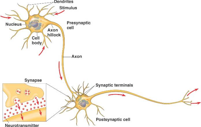 Robomate+ neurotransmitters